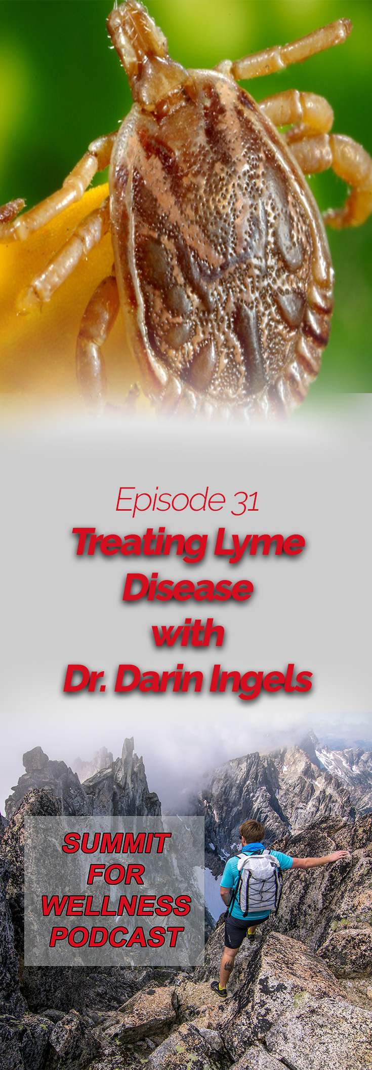 Dr Darin Ingels discusses ways to treat lyme disease