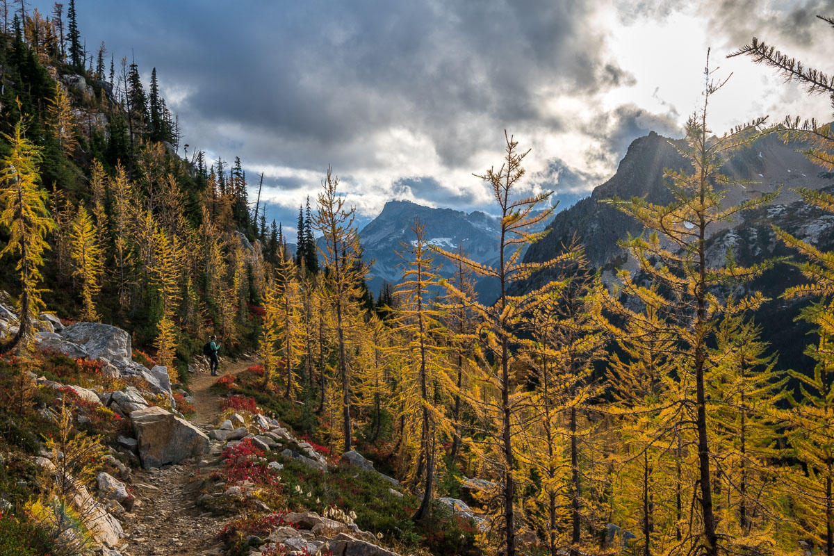 Amazing lighting shining on the larches at Cutthroat Pass