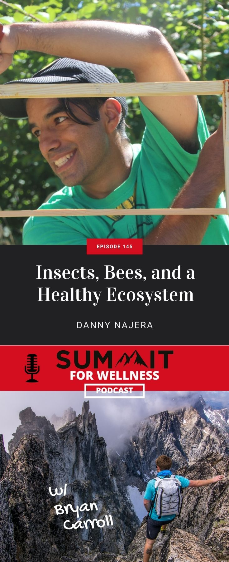 Learn how insects and bees keep a healthy environment