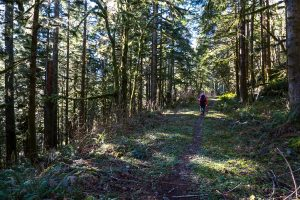 The CCC Trail takes you through the woods, with the occasional views