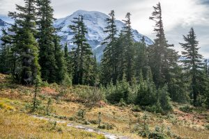 First views of Mt Rainier