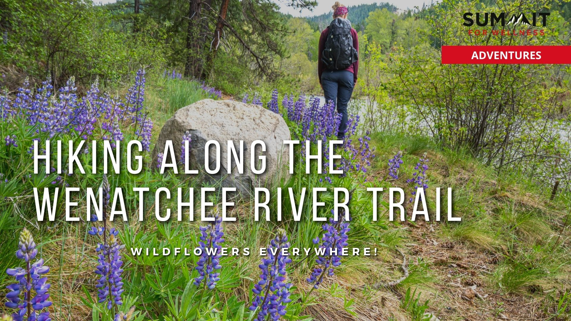 Hike along the Wenatchee River Trail to see beautiful wildflowers