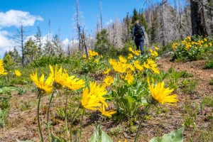 Wildflowers along the route up to Hex Mountain