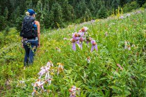 Wildflowers before Owyhigh Lakes
